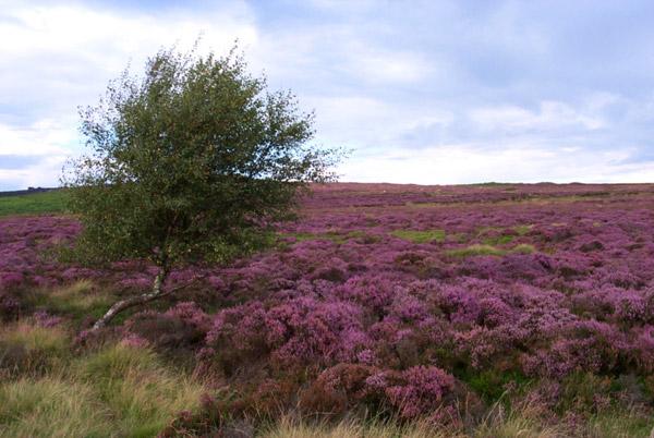Moors near Hathersage